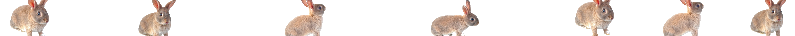 Un théme pour Z'Animaux du Web - Page 2 Barre10