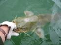 Votre meilleure journée de pêche en 2007 Img_0622