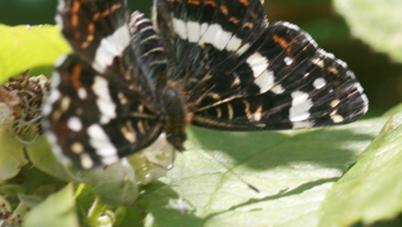 Papillon - Page 2 Carte_10