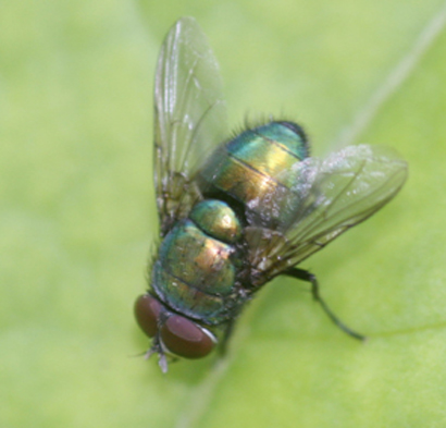 Les insectes Img_4313