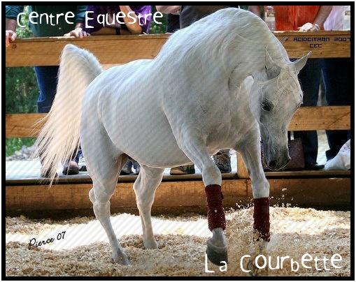 Centre Equestre la Courbette