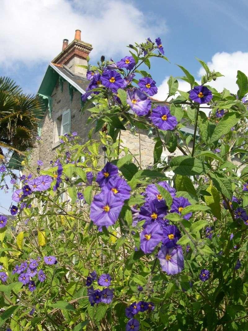 Fleurs ... tout simplement Dscn6818