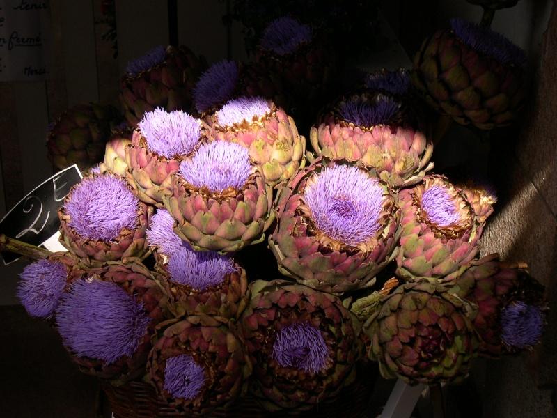Fleurs ... tout simplement Dscn6835
