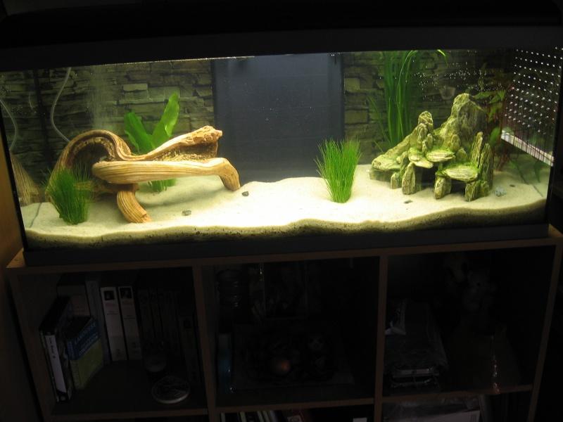 Mon aquarium en cours de création. Aquari10