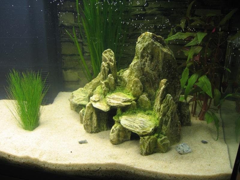 Mon aquarium en cours de création. Aquari12