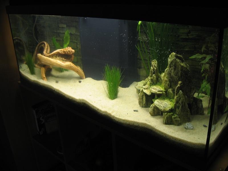 Mon aquarium en cours de création. Aquari13