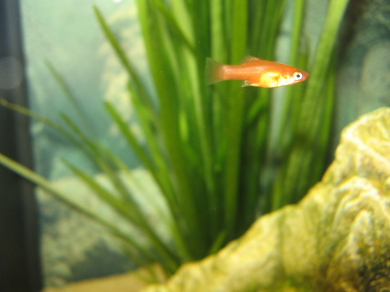Mon aquarium en cours de création. Aquari20