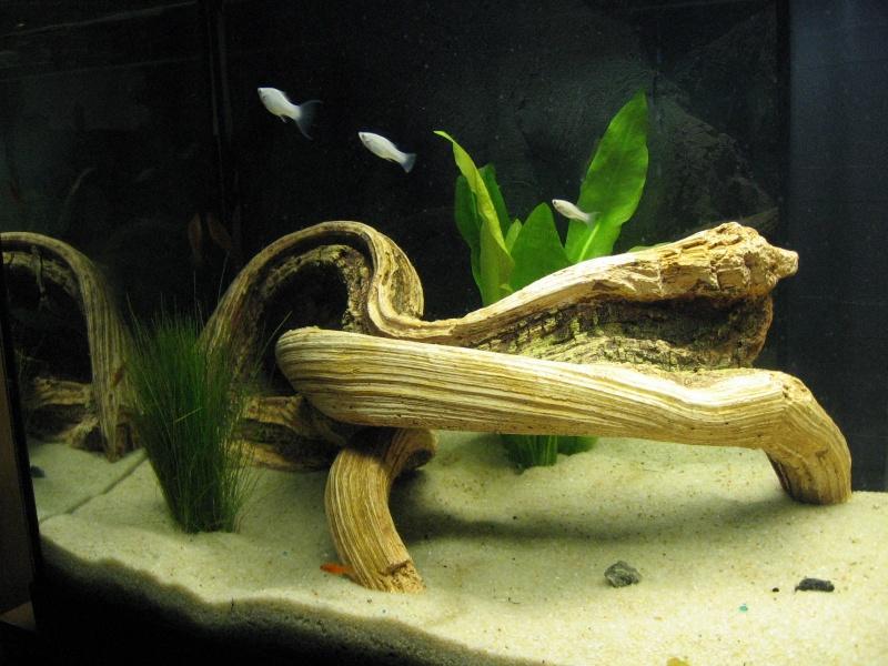 Mon aquarium en cours de création. Aquari23