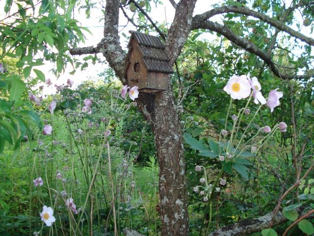 le jardin de Giroflee - Page 3 Jar_3041