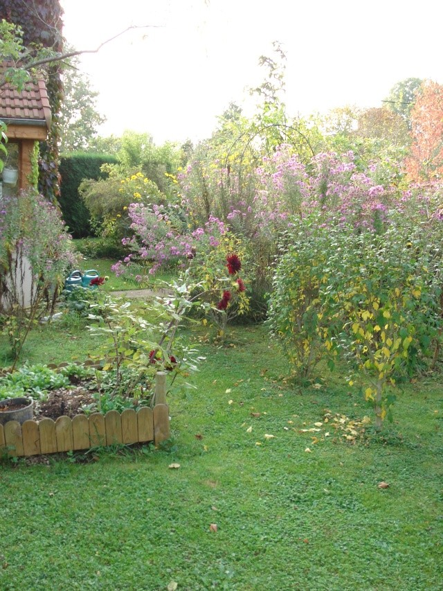 le jardin de Giroflee - Page 6 Jardi104