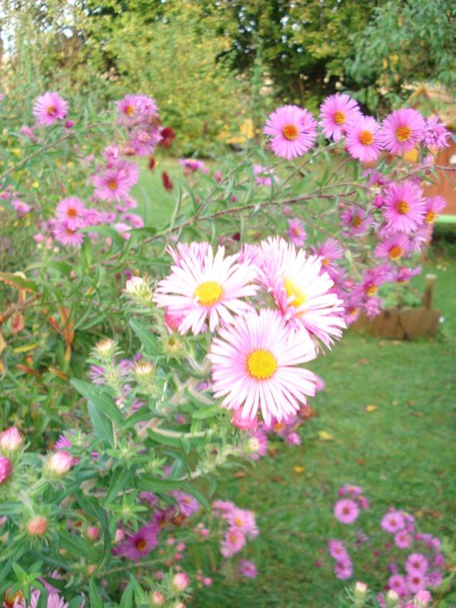le jardin de Giroflee - Page 6 Jardi106