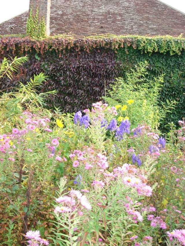 le jardin de Giroflee - Page 6 Jardi108