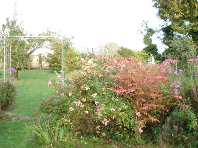 le jardin de Giroflee - Page 6 Jardi109