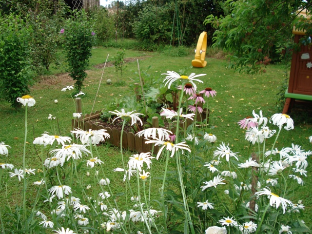 le jardin de Giroflee - Page 3 Jardin54