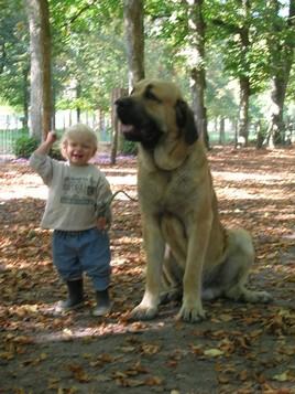 la croissance de vos chiens... Ilan_110