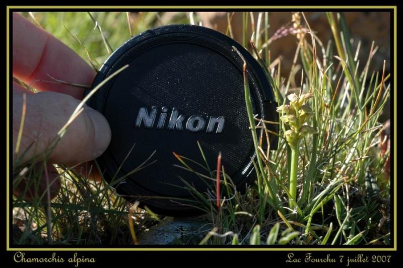Chamorchis alpina  ( Orchis nain ) Cham_016