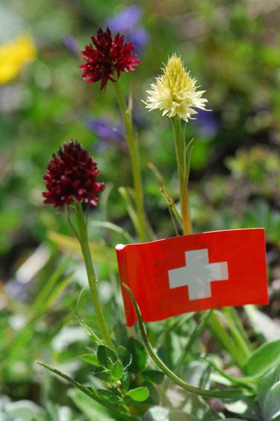[Autriche et Dolomites] Nigritelles et autres orchidées... G_rhel12