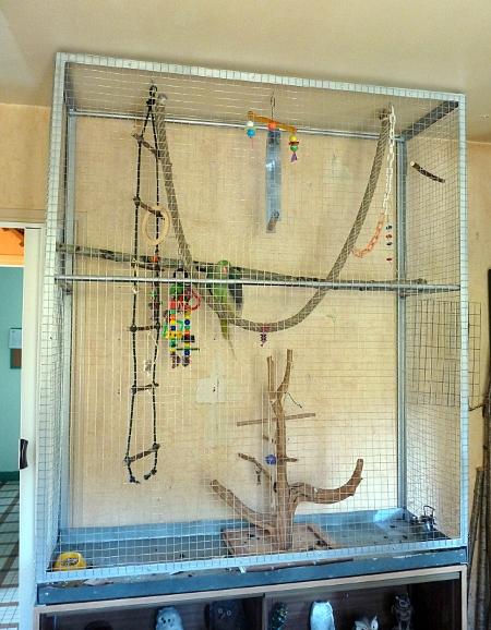 nouvelle cage pour coco  P1050210