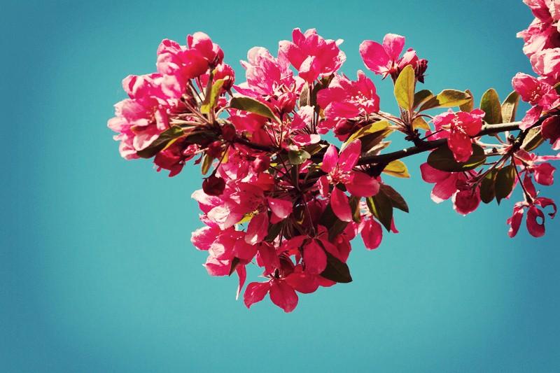 Le printemps... Img_3610