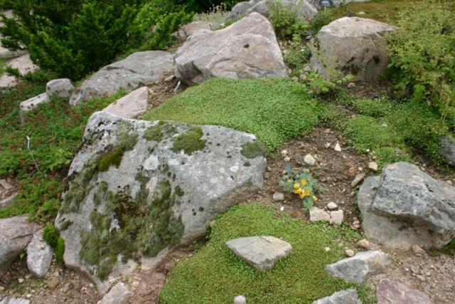 Une grande rocaille Scene_19