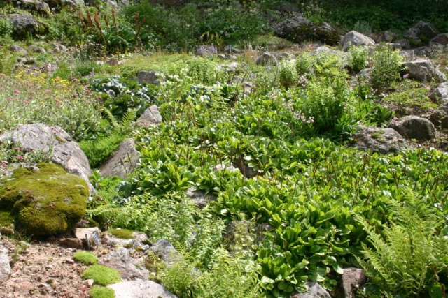 Une grande rocaille Scene_31