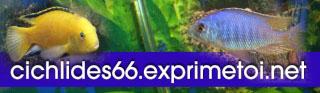 Pseudotropheus Interruptus Logo_c11