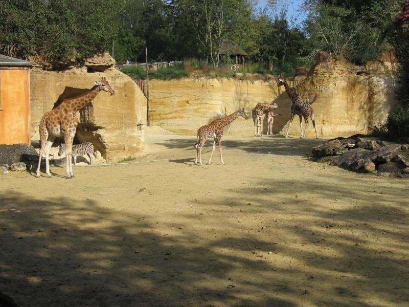 Parcs zoologiques du monde Doue_l10
