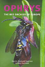 Ophrys magniflora Ophrys10