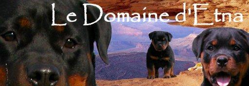 Rottweilers du Domaine d'Etna