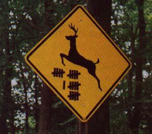 deer on the road 96714_10