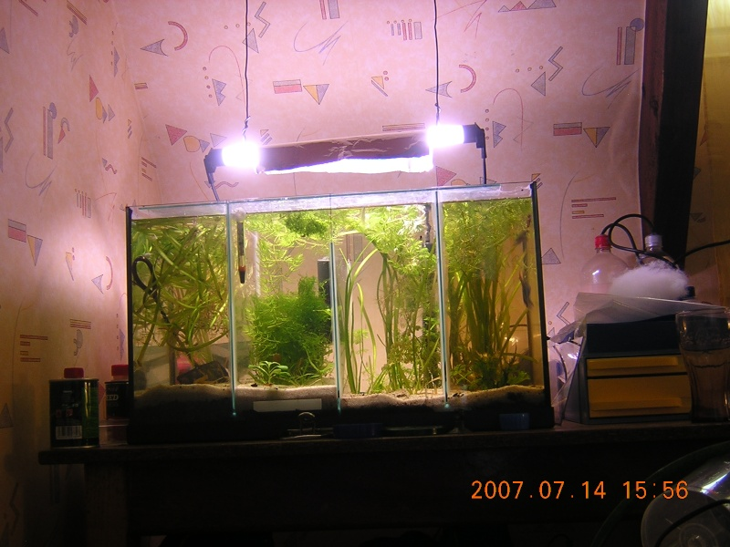 Mes aquariums Dscn3211