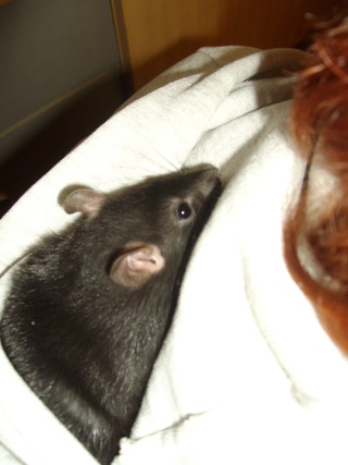 Rats Imgp1316