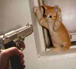 Smesni sliki Kitten11