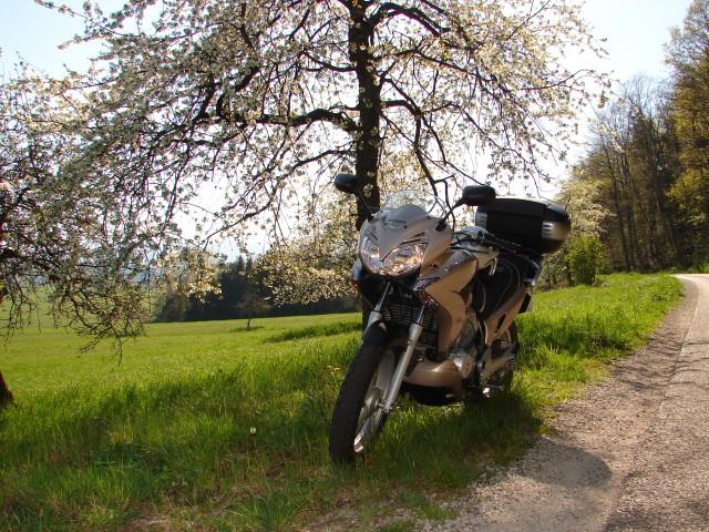 SORTIE DU 15 AVRIL 2007 AU DONON 77710