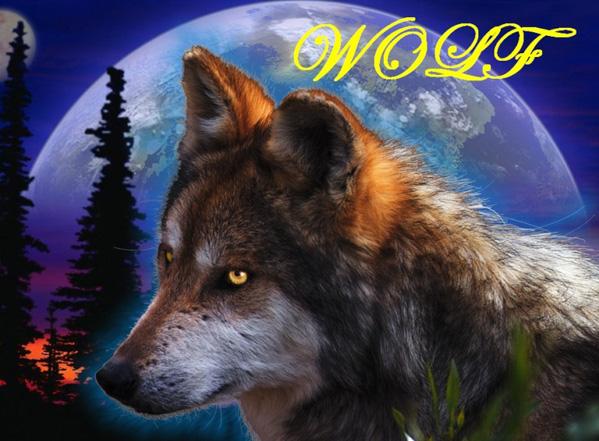Wolf Forum