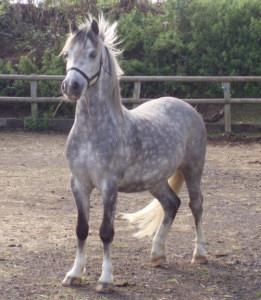 poneys Sectio10
