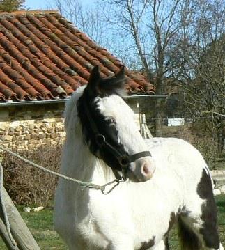White angel à la maison P1020110