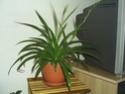 Mes plantes, pouvez vous m'aider? Plante21