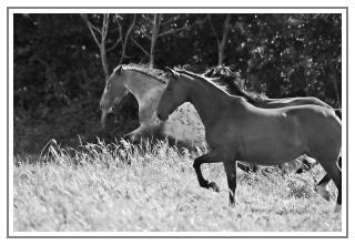 Equus Concilium