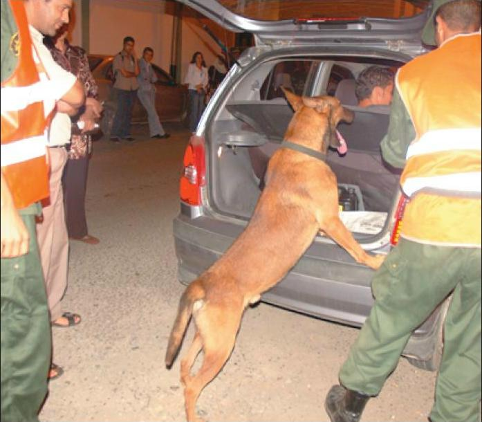 الكلاب البوليسية Brigad10