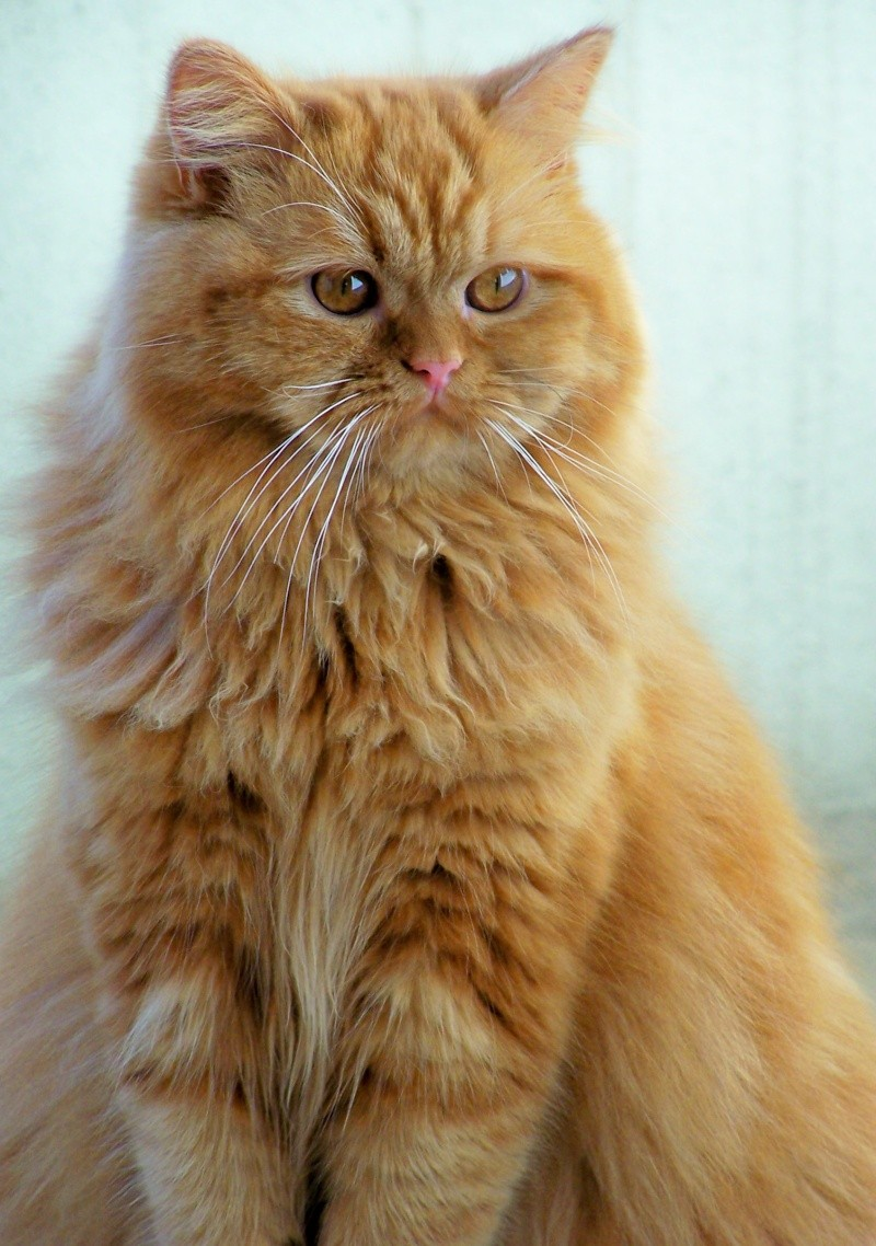 red tabby 100_0110