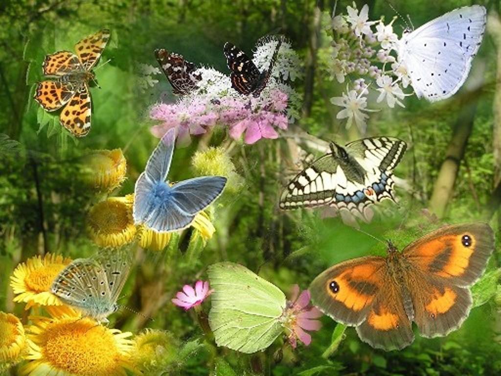 Créations autour des insectes Papill10