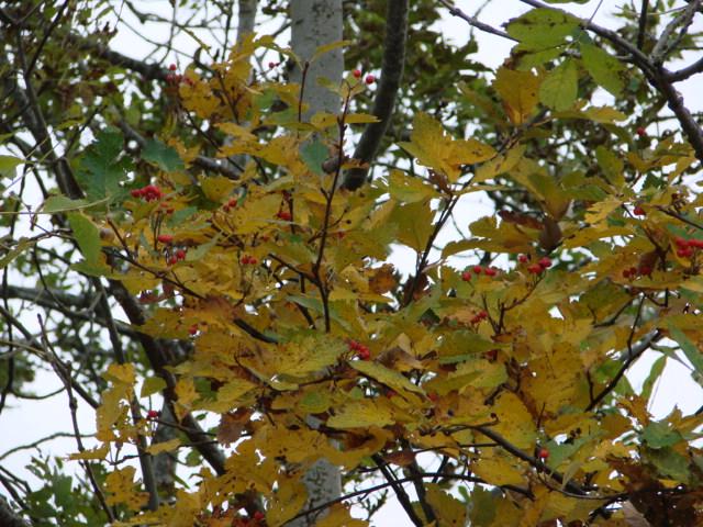 Le temps à Madelonnet du mois d'octobre 2007 2007_166