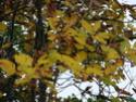 Le temps à Madelonnet du mois d'octobre 2007 2007_167