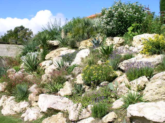 Un yucca en rocaille Rocail10