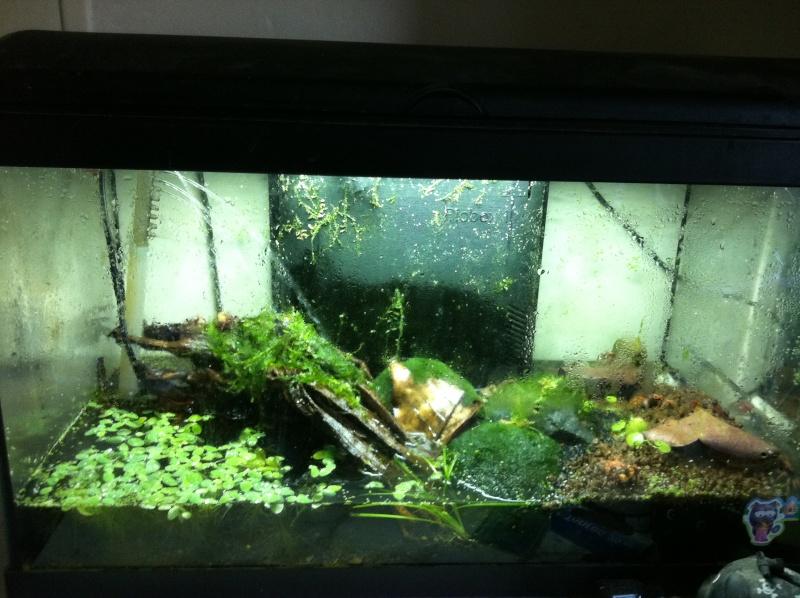Aquaterrarium pour geosesarma Img_0413