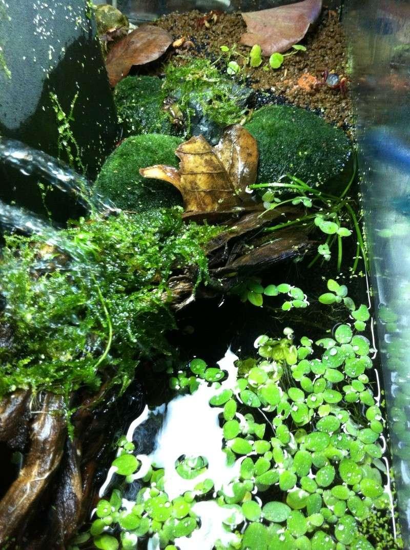 Aquaterrarium pour geosesarma Img_0414