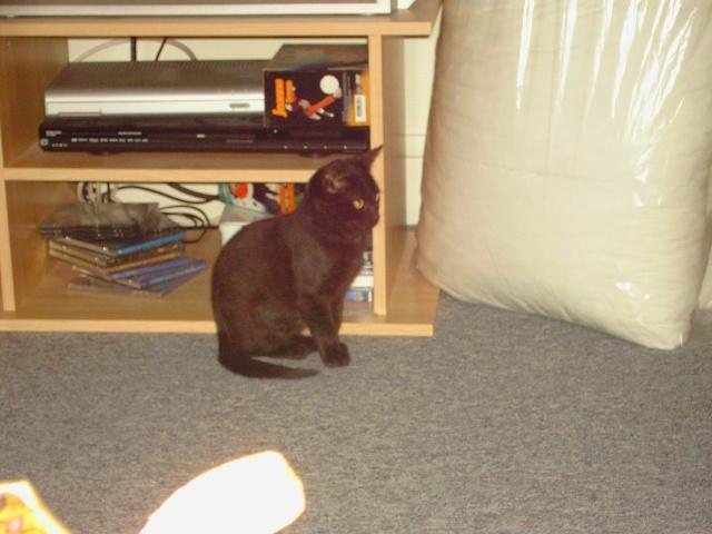 Keenah petite panthère noire 5 mois Quebec16