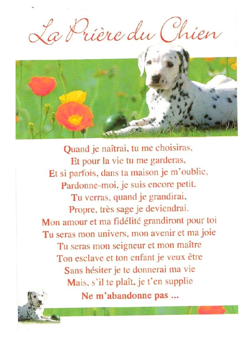 le journal d'un chien!!!! Pour dire jamais plus!!!!!!!!!!! La_pri10