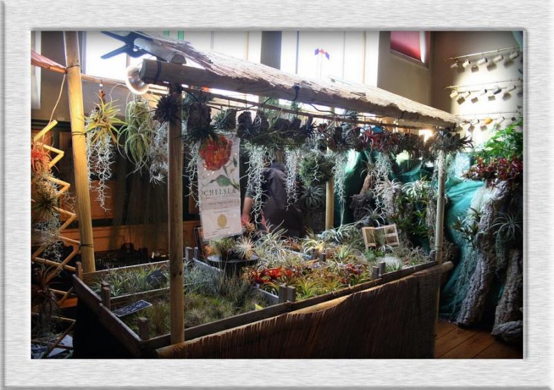 2ème salon international d'orchidées à Oudenaarde 310